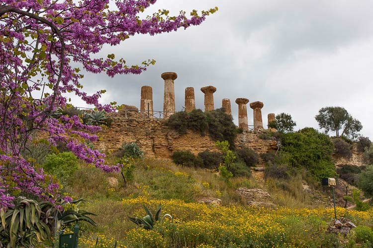 agrigento flowers spring picture